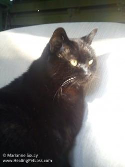 My cat Kia 4 days before her passing