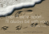 healing pet loss quote